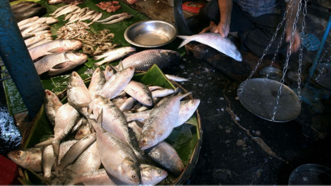 160413114148_bangla_hilsa_hilsha_ilish_fish_new_year_640x360_gettyimages_nocredit