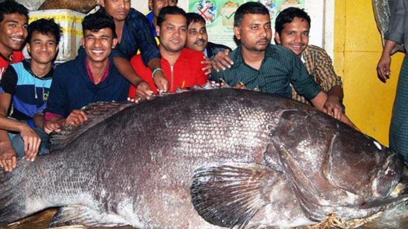 233401fish