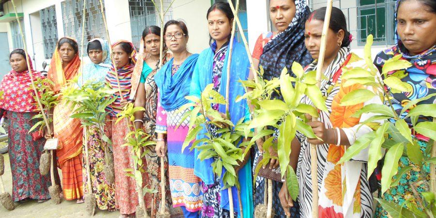 Magura  Tree distribution  pic 1