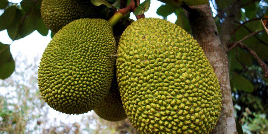 Thai-Fruit-Jackfruit-DSC08918