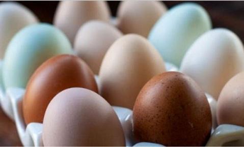 Egg--ok