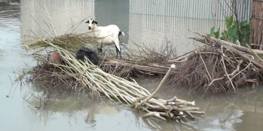 Kurigram Flood Situation photo-(2) 19.07.16 (1)