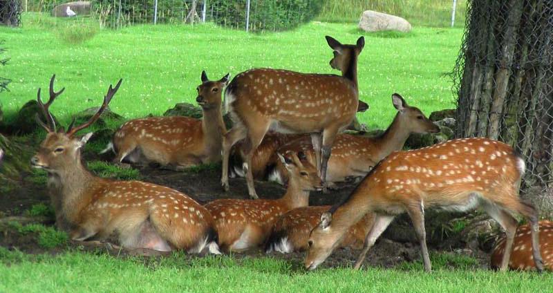 deer_6671