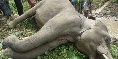elephant__122253
