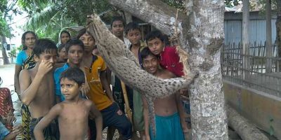 tiger2_dhakatimes_122921_0