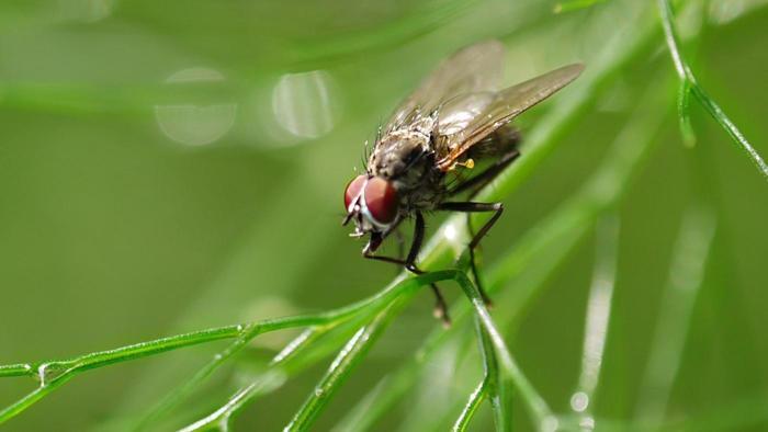 flies-rains_1736fb118dc198ff