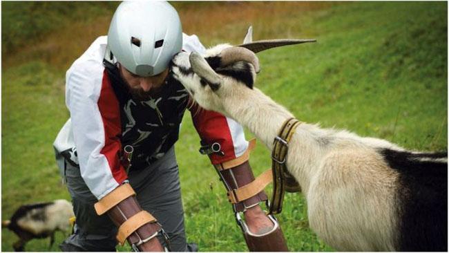 goat-2_25747_1474614158