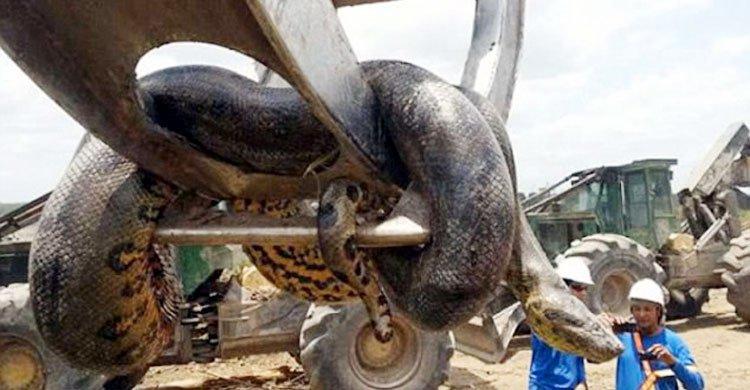 snake20160925174058