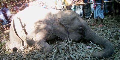 woild-elephant-die-picture1