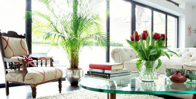 airy-living-room-design-ideas-with-indoor-plants