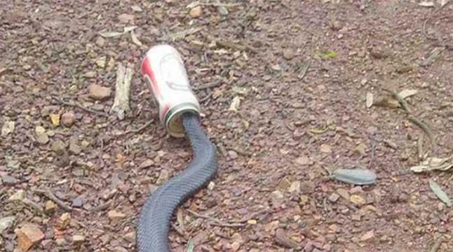 snakebear-01