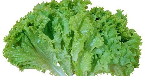 lettuce_pata20161128163719