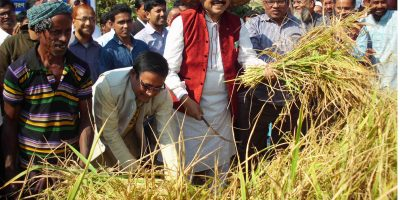 raninagar-paddy-cutting-mp-pic-1