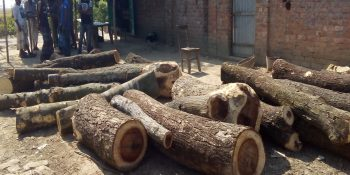 raninagar-tree-pic