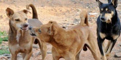 dog_eat_baby_child_31731_1479918429