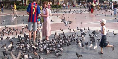 pigeon-birth-barca