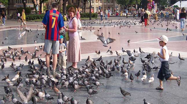 pigeon-birth-barca